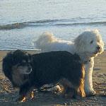 エリさんの愛犬チャッキー&ドゥーイー