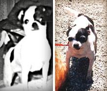 Micaさんの初代犬、リリちゃん