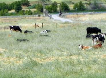 【アメリカ発】家畜動物のレスキュー、権利擁護、一般への教育活動を行う全米最大の団体★ファーム・サンクチュアリーについて