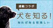 連載コラボ:犬を知る!