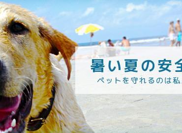 ペットのSummer Tip!暑い夏を安全に乗り切る為に。