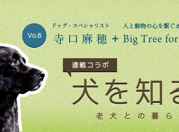 【米国発】連載コラボ企画!第6回目:老犬との暮らし