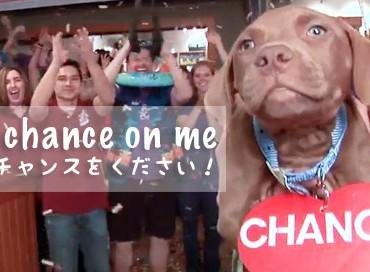 【米国発】Take a Chance on Me! (僕にチャンスを!)とシェルターの動物達と作ったNC州にあるシェルターのプロモーション動画がかなりいけてる!