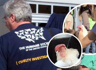 全米でも2番目に大きな規模の家畜動物救助:動物愛護団体一致団結!