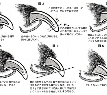 Dog Nail Diagram, Dog, Free Engine - 191.9KB