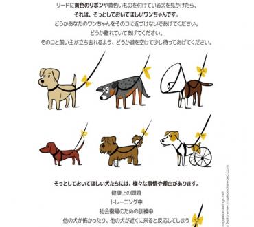 黄色のリボンは「そっとしておいてね。」のサイン☆スペースが必要なワンちゃんの為のイエロードッグプロジェクト!