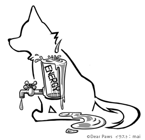 犬のエナジーカップ