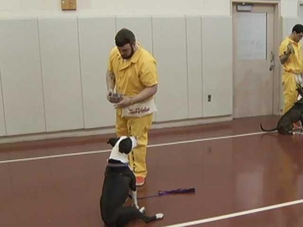 シェルターの犬とNY州アーバニー郡刑務所の受刑者がお互いを助け合えるプログラム