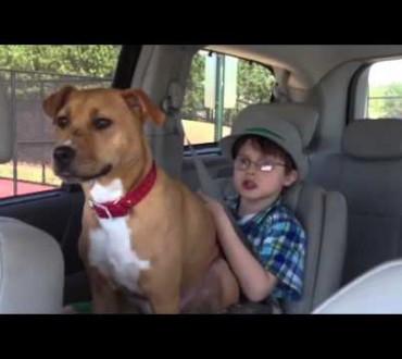 自閉症の子供の心を開いたレスキュー犬(保護犬)ジーナ★ひどい虐待を受けていたにも関わらず人間を癒す犬がいた