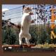 【日本語訳】ネコ科動物の爪除去手術の真実☆一度見たら忘れられないThe Paw Projectのパワフルなドキュメンタリー映画!