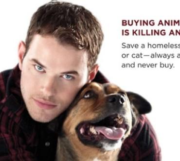 映画「トワイライト」の米俳優、猫の爪除去手術の停止を訴える映画のプロモをツイート♥
