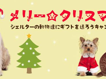 クリスマスシーズンは動物愛護団体や保健所の動物達に愛をプレゼントできるチャンスの日!