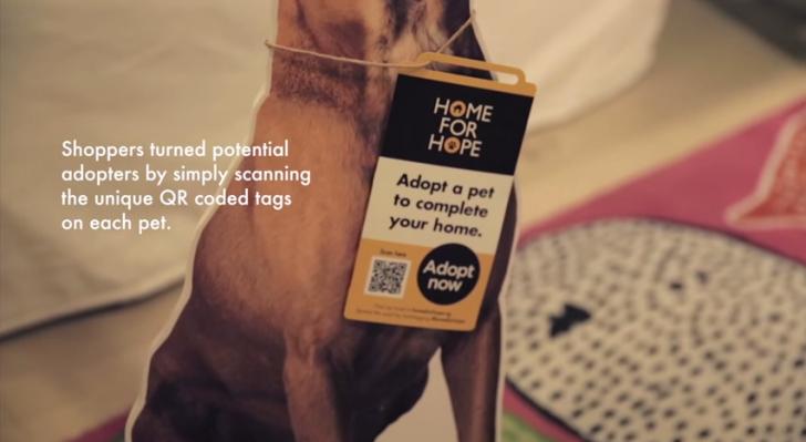 home-for-hope-dog-adoption-728x399