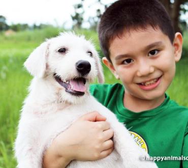 【フィリピン発】9歳の少年によって作られたアニマルシェルター「ハッピー アニマルズ クラブ」をサポートしようよ!