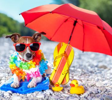 暑い夏を乗り切る為に便利なペットグッズ11点&夏を安全に過ごす為のヒント!