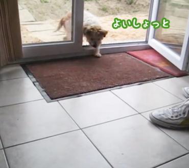 家に入る時にこの犬がとった行動に拍手喝采!ありがとうわんこ〜!!