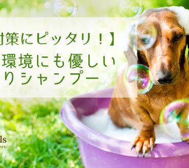 【犬のノミ対策にピッタリ】犬にも環境にも優しいノミとりシャンプー その他にも人間にも家周りのお掃除にも使えるよーん♬