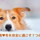 犬も家族❤︎冬を安全に過ごす7つの注意点