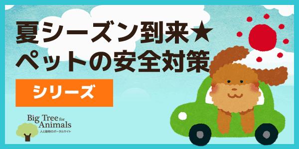 夏シーズン到来★ペットの安全対策シリーズ