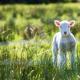 【コラム】動物虐待と自己否定との関係って?広めよう自分への愛の輪♫
