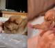 一枚の写真から始まったレスキュー犬&フォスター一家の記録