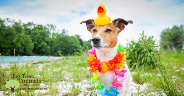 暑い夏の犬のアイスキャンディ!