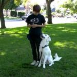 【愛犬と一緒にエンジョイしながら】クリッカートレーニングって何ですか?