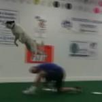 これぞ犬の素晴らしさ!アメリカのフリスビー犬たち。