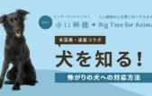 【米国発】連載コラボ企画!第1回目:「犬が怖がってる時は抱きしめてあげるのが一番良い」は本当?
