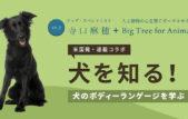【米国発】連載コラボ企画!第2回目:犬のボディーランゲージ