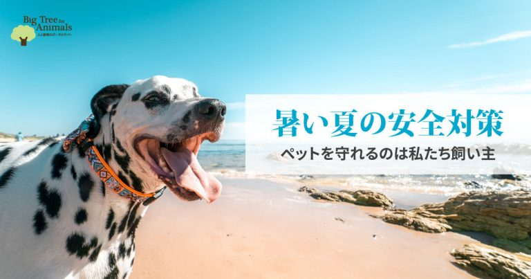 暑い夏の安全対策 ペットを守れるのは私たち飼い主