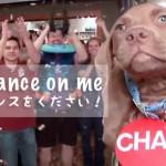 【米国発】Take a Chance on Me! (僕にチャンスを!)とシェルターの動物達と作ったNC州にあるシェルターのプロモーション動画がめっちゃいけてる!