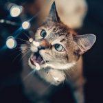 クリスマスシーズンで猫にとって危険な10項目