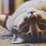 シニアの猫をアダプト(譲渡)する10個の理由