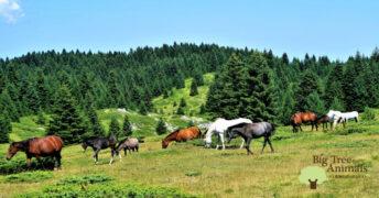 馬は関係を築いた人間を絶対に忘れない