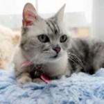 世界で一番うるさい猫?92デシベルで喉をならすスモーキー