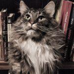 【米国】動物虐待前科者のデータベース登録化を希望する動き