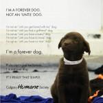 I'm a forever dog... 最後までずっと一緒に
