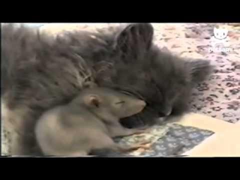 猫とネズミ仲良し