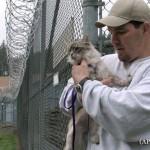 刑務所で猫と暮らし、チームワークを学ぶ囚人達