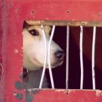 【米国】米農務省インターネット上でのペット販売の規制法律提案中