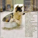 犬の遺言 by Laska