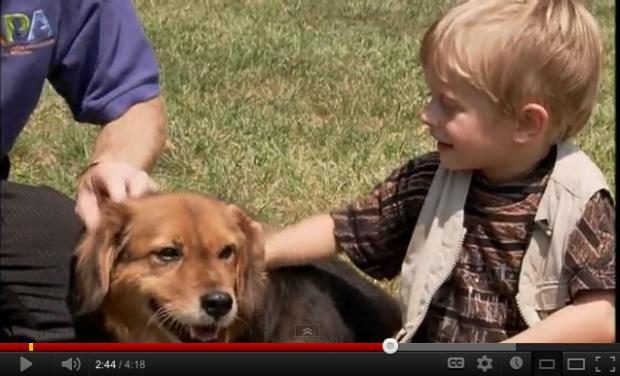 ジョシュア君と9歳のシニア犬