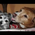 美しきシニア犬達
