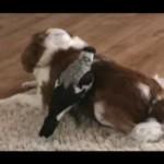 犬が大好きな鳥☆