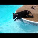 初めてプールと出会った犬がとった怪しい行動?