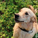 【安全&ナチュラル】ペットとお家をノミから守る方法