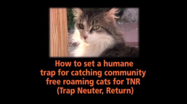 安全に野良猫を捕獲する為の方法(TNR活動)