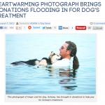 【追記あり】湖に浮かぶ男性と愛犬のシェップ君の感動的な写真が老犬の関節炎の治療費への寄付を集める☆