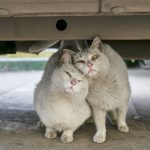 「人道的な地域猫の捕獲方法(TNR活動)」米国最大のノーキルシェルター、ベストフレンズ・アニマルソサエティのビデオ